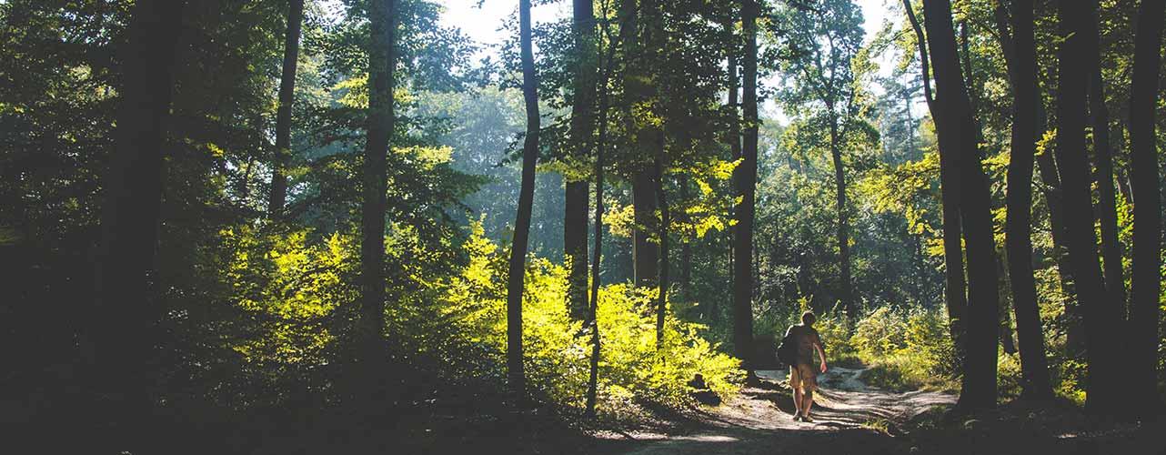 Das ist kein Skilanglauf, dafür Wandern im Bayerischen Wald