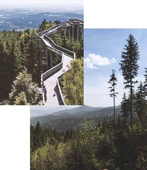 Wellnessurlaub im Bayerischen Wald - unsre Umgebung